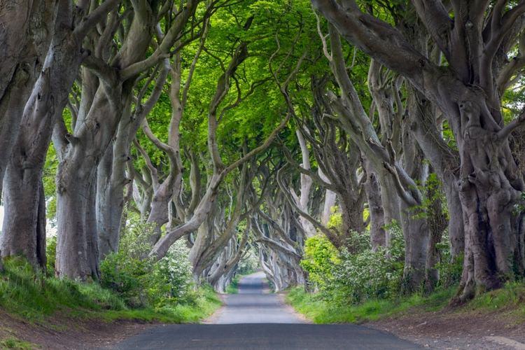 طبیعت کشور ایرلند شمالی